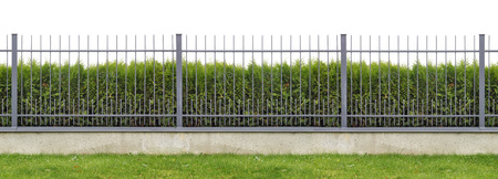 fence background: Metal village mass production  long gray fence  isolated panorama collage. Behind the fence is growing evergreen hedge of Thuja tree.