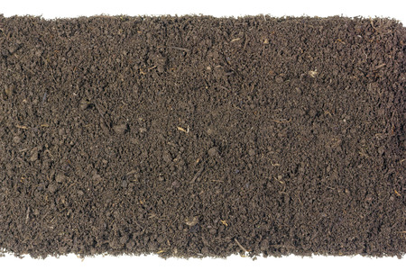 humus soil: Long isolated strip of the fertile soil humus compost. Top view. There are insects and parts of  rotted plants. Earth texture Stock Photo