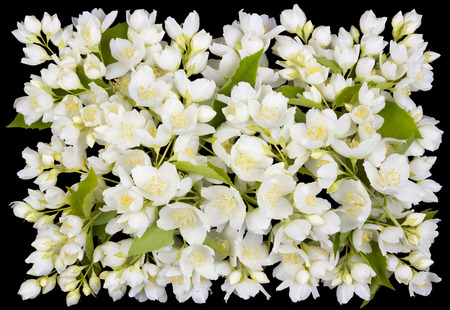 funeral: Tragic square funeral buttonhole from white  jasmine flowers. Isolated on black