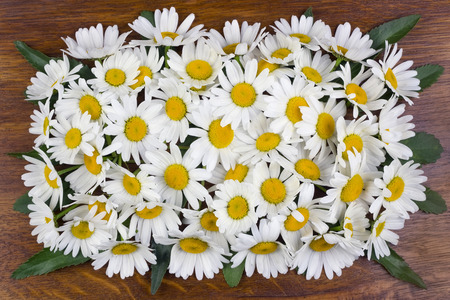 buttonhole: Buttonhole of a gentle whitedaisies on the ancient polished wooden oak panel
