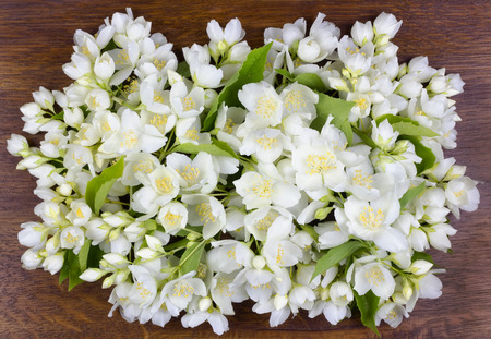 buttonhole: Buttonhole of a gentle white jasmine on the ancient polished wooden oak panel Stock Photo