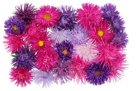 buttonhole: Buttonhole from gentle autumn violet and pink asters flowers.  Isolated on white Stock Photo