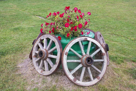 sewerage: Rustic style  floral bed  on  the sewerage with wooden wheels and fragrant Surfinia flowers. Green summer lawn