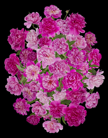 tragic: Tragic  funeral buttonhole wreath from pink  summer peonies flowers. Isolated on black