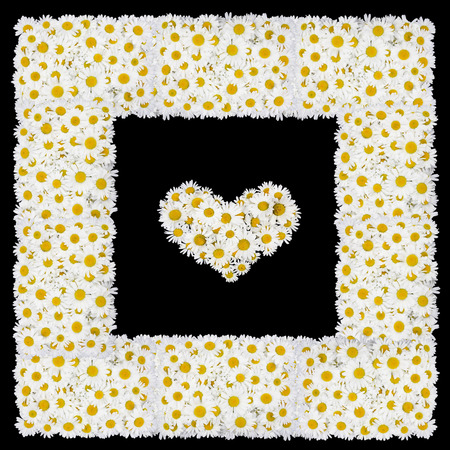 tragic: Tragic square love funeral photo frame from white daisies flowers. Isolated on black abstract collage Stock Photo