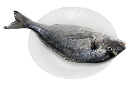 cleared: The fresh not cleared sea grouper fish ( Dolphin ) on a white ceramic plate with wavy edges. Isolated with patch