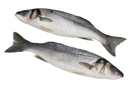 cleared: The fresh not cleared sea grouper fish ( Seabass, Old Salt ). Isolated with patch