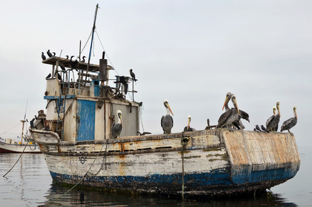 episode: Sea pelicans and cormorants birds have a rest on the broken fishing boat in rainy day. Natural episode of the Peruvian fauna Stock Photo