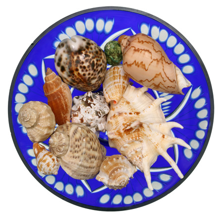 Sinks of tropical sea mollusks lie on blue glass vase. Top view  isolated studio shot