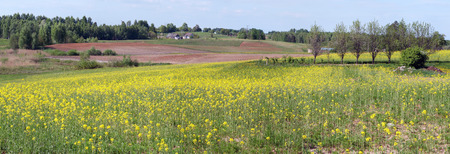 Blossoming May colza agricultural plants  near the poor European village. Sunny May day panoramic landscape Stock Photo