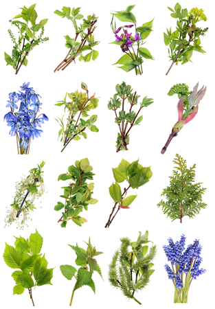 April spring  European wild  plants and flowers set. Isolated on white studio macro shots. Full  size images find  in my portfolio