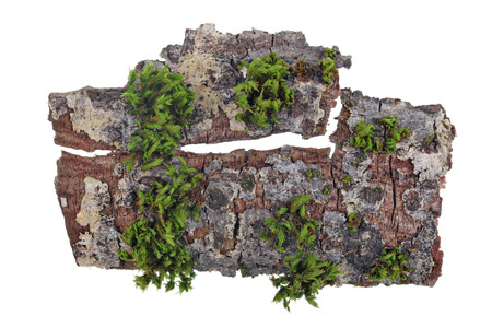 Tropical island top view  concept. On a piece of bark of a oak tree the green moss grows