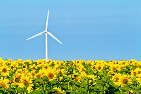 Typical windmill or aerogenerator of aeolian energy and a field of sunflowers photo