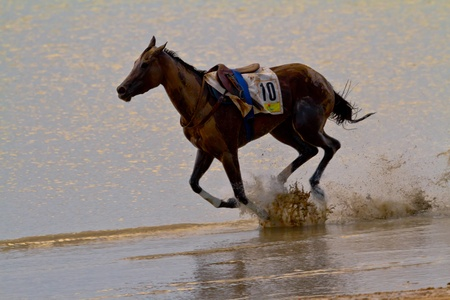 SANLUCAR DE BARRAMEDA, CADIZ, SPAIN - AUGUST 11: Accidented horse  run on horses races of the beach of Sanlucar de Barrameda on August 11, 2011 in Sanlucar de Barrameda, Cadiz, Spain.