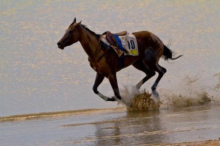 SANLUCAR DE BARRAMEDA, CADIZ, SPAIN - AUGUST 11: Accidented horse  run on horses races of the beach of Sanlucar de Barrameda on August 11, 2011 in Sanlucar de Barrameda, Cadiz, Spain. Stock Photo - 11063988