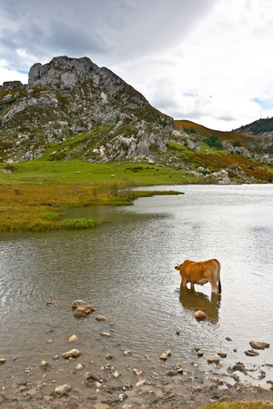 covadonga: Fantastic lake Ercina, one of the famous lakes of Covadonga, Asturias ,  Spain