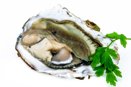 One oyster on a white background Stock Photo - 15706347