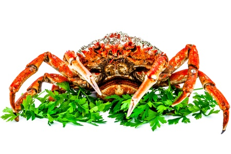 A spider crab on a white background photo
