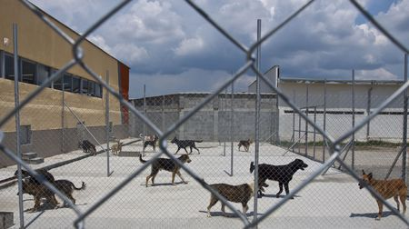 homeless dogs behind fance outside, in a shelter