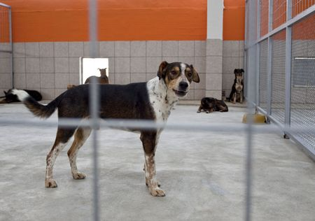 homeless dog in a shelter behind bars, looking at camera