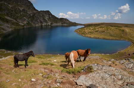 horses are grazing by one of the seven Rila mountains lake, called �the kidney� Stock Photo