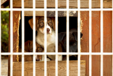 Three little puppies behind bars in a dog shelter. One is sitting, two are lying on the floor of a small doggie house. Stock Photo
