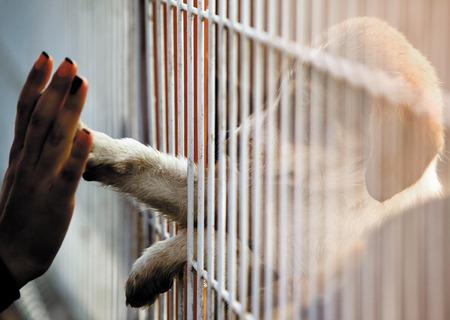인간의 손에 입양 센터의 울타리를 통해 귀여운 작은 강아지의 발을 만지고있다. 스톡 콘텐츠