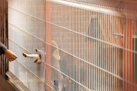 from behind: A little homeless puppy behind bars in a shelter is reaching out to touch a human hand.