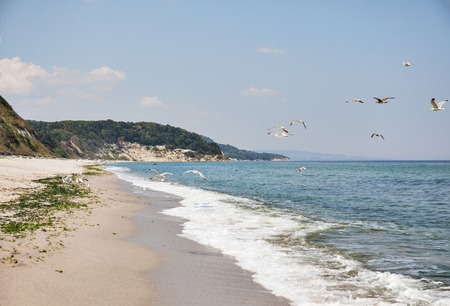 A horizontal view of a remote beach with a few people somewhere far away and flying herring-gulls. Reklamní fotografie