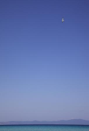 Sea Sky Bird