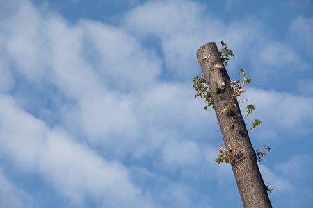 Cut Tree Sky