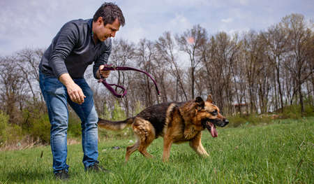 An adult male is unlishing his dog - a German Shephard to play on a green grass lawn in spring time. Standard-Bild