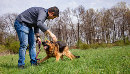 A men is playing with his dog - a German Shepherd on a green grass lawn in spring time.