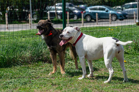 Two tired dog friends are standing together with mouth open, tongue out in an enclosure for pets outdoors. Standard-Bild