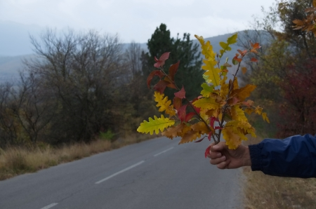 Bouquet with colorful autumn twig