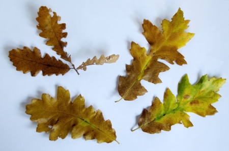 Herbarium from beautiful autumn leaves Stock Photo