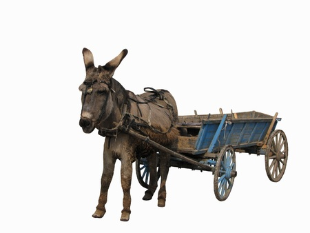 ears donkey: Donkey and card isolated on white background Stock Photo
