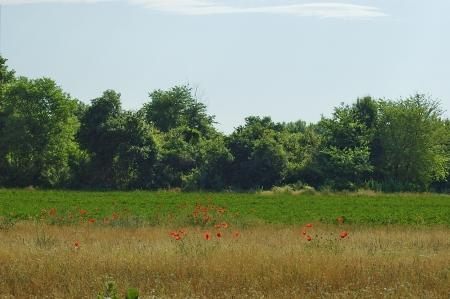 kerkini: View for the field at Kerkini lake, nord Greece Stock Photo
