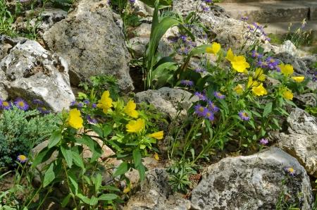 Part of public gardens in Peshtera town - rockery