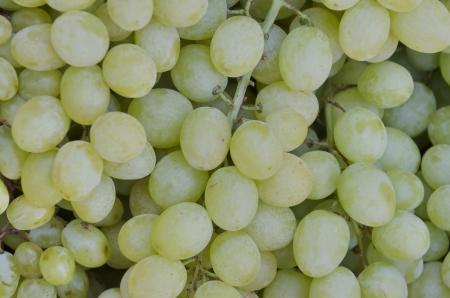 Fresh ripe delicious yellow juicy dessert grapes