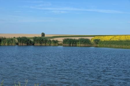 Small dam lake by sunflower rural field, Bulgaria
