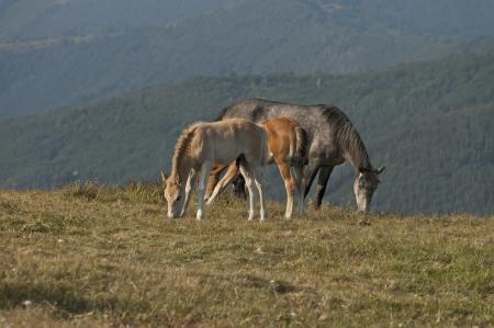 Mountain landscape and horse at Central Balkan mountain, Bulgaria