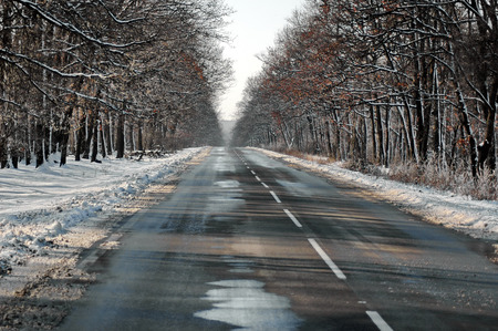 wooded: Frozen road in the winter at wooded country, Ludogorie, Bulgaria