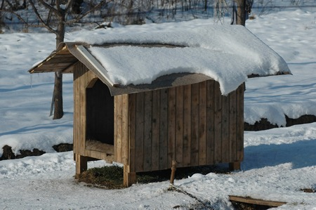 Doghouse in sunlight winter at yard  photo
