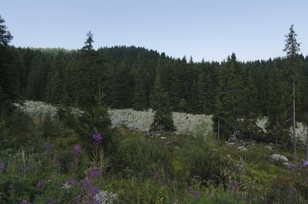 View of stone river in Vitisha mountain, Bulgaria Stock Photo