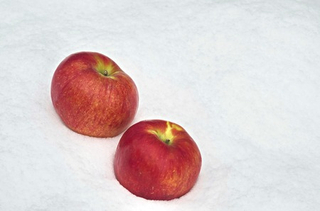 refrigerate: Apple fruit refrigerate in the snow-drift at garden, Sofia, Bulgaria Stock Photo