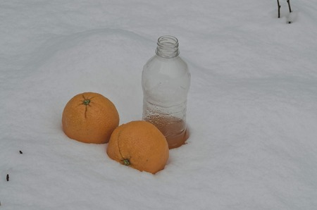 refrigerate: Orange fruit and orange juice refrigerate in the snow-drift at garden, Sofia, Bulgaria
