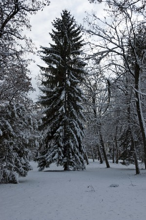 south park: Winter forest in the South park, Sofia, Bulgaria