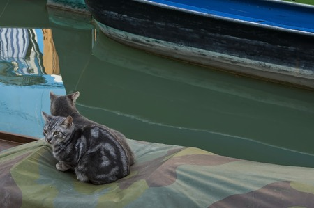 Two cats sitting on a shutter of boat  in Burano island Italy Europe
