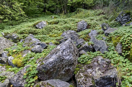 rockery: Part of authentic rockery in Vitosha mountain Bulgaria Stock Photo